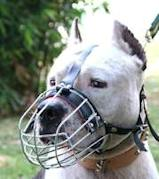 Staffordshire Terrier Wire Muzzle-Cage Basket Dog Muzzle