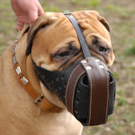 Protective  Training Dog Muzzle