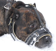 Comfortable Nappa Leather Dog Muzzle