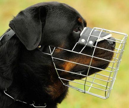 Rottweiler Wire Dog Muzzle, Rottweiler Basket Dog Muzzle - PADDED