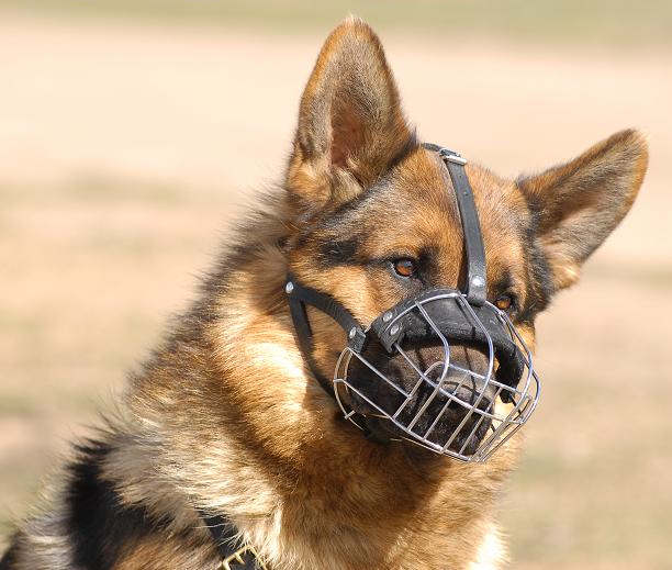 German Shepherd Wire Muzzle-Cage Basket Dog Muzzle