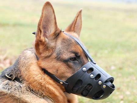 Everyday German Shepherd Leather dog muzzle-gsd muzzle ...