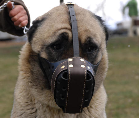 Attack Training Leather Dog Muzzle with Front Plate