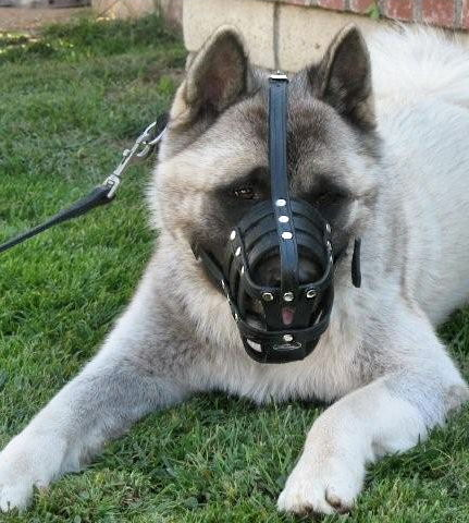 Lightweight Leather Ventilation Dog Muzzle for Akita