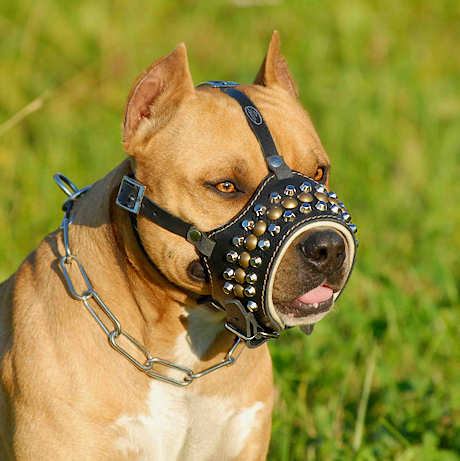 Best Dog Muzzle For Pitbulls