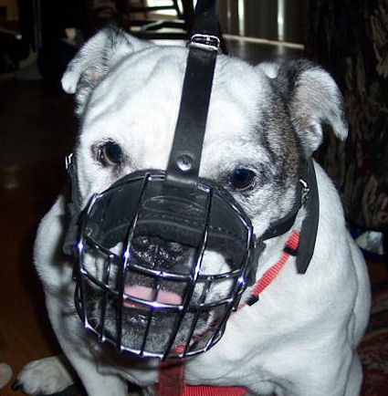 British Bulldog Wire Muzzle-Cage Basket Dog Muzzle