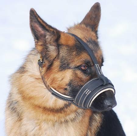 Royal Nappa     PADDED Leather Dog Muzzle -CUSTOM MUZZLE M88