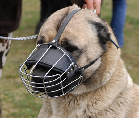wire basket     dog muzzle for Shepherd