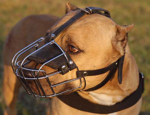 PitBull Wire Muzzle-Cage Basket Dog Muzzle