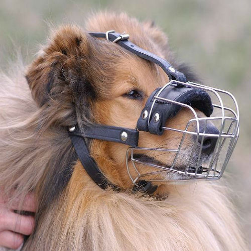 Collie Wire Muzzle-Cage Basket Dog Muzzle
