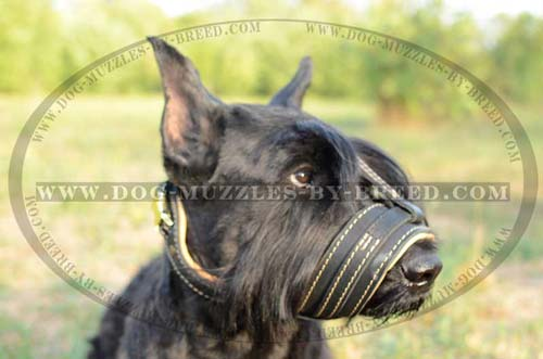 No biting leather muzzle