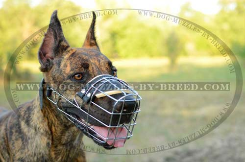 Stylish well-fitting muzzle