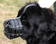 Basket Leather Dog Muzzle,No Bark Muzzle for Newfoundland