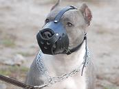 Leather Safety Dog Muzzle,No Bite,No Bark for PitBull