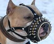 Royal Spiked Leather Dog Muzzle for Amstaff